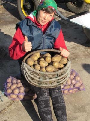 Наш картофель Скарб